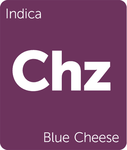 indica blue cheese
